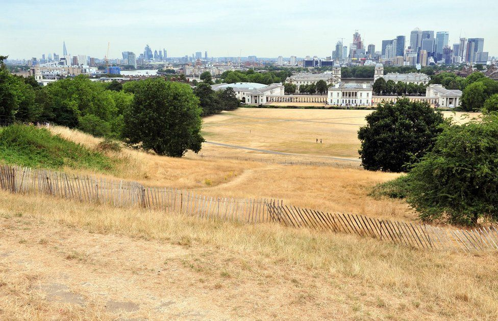 Burnt dry grass on Greenwich Park in London.