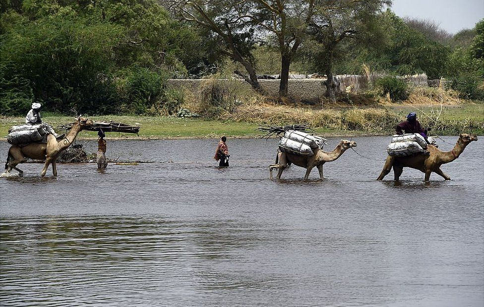 Camels crossing Lake Chad
