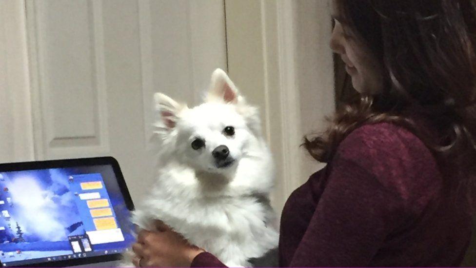 Danbi the dog