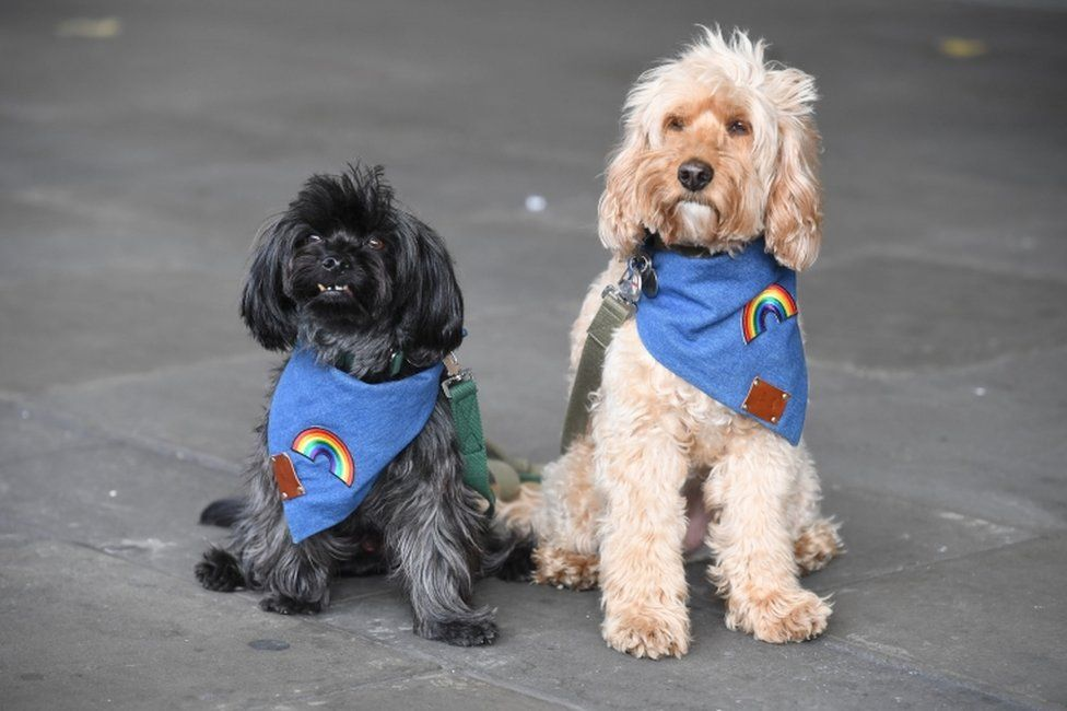 Two dogs outside Chelsea and Westminster Hospital were dressed for the occasion