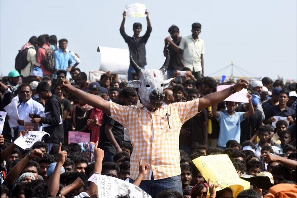 Indian students shout slogans and hold placards during a demonstration against the ban on the Jallikattu bull taming ritual, and calling for a ban on animal rights organisation PETA, at Marina Beach at Chennai on January 19, 2017.