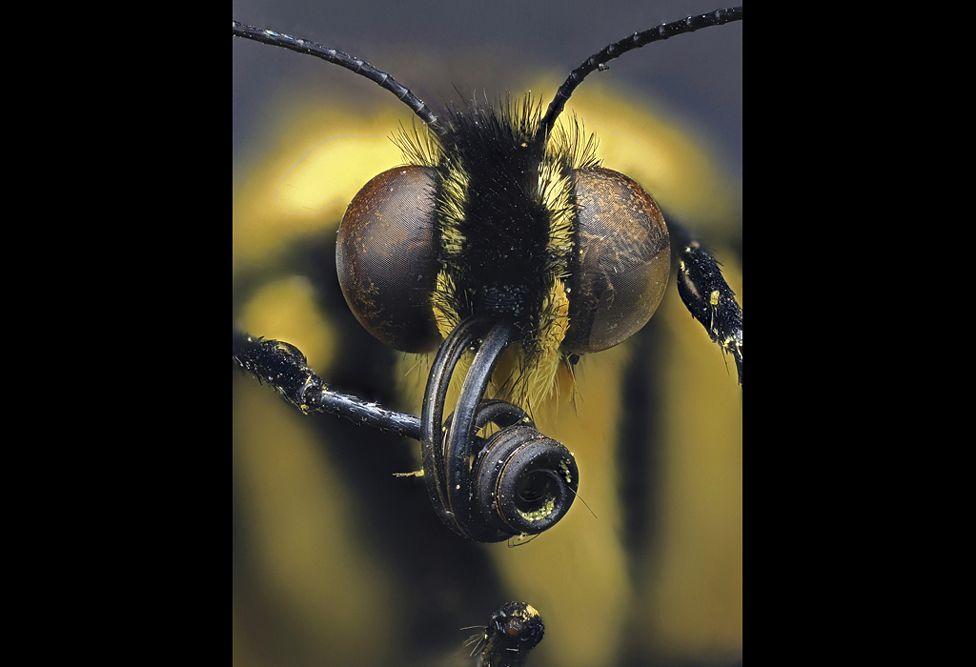 Swallowtail butterfly - Daniel Saftner, Macroscopic Solutions