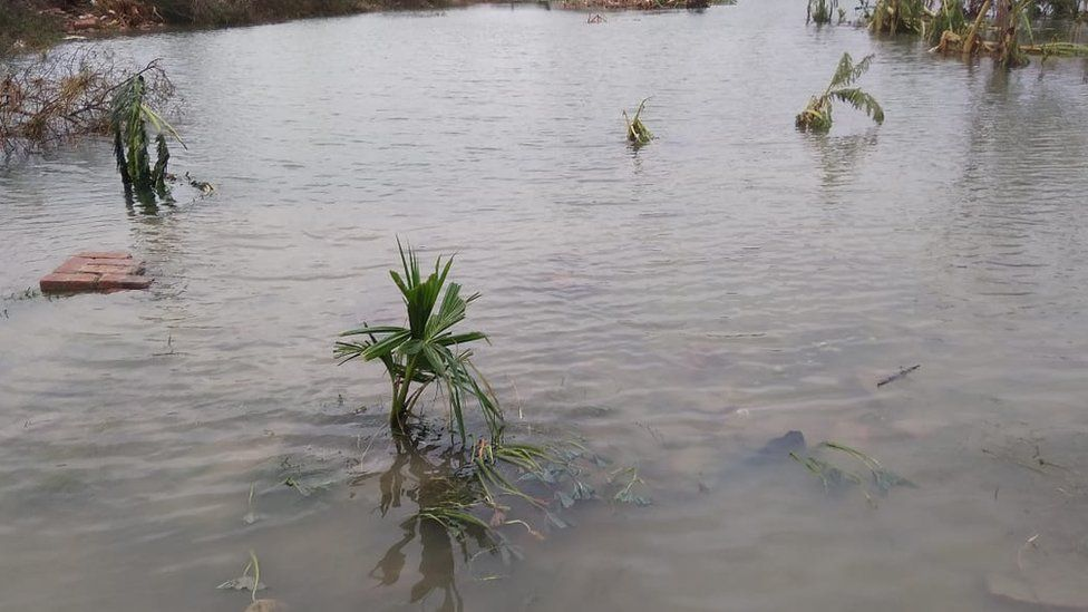 Flooding from contaminated sea water, has likely destroyed the soil.