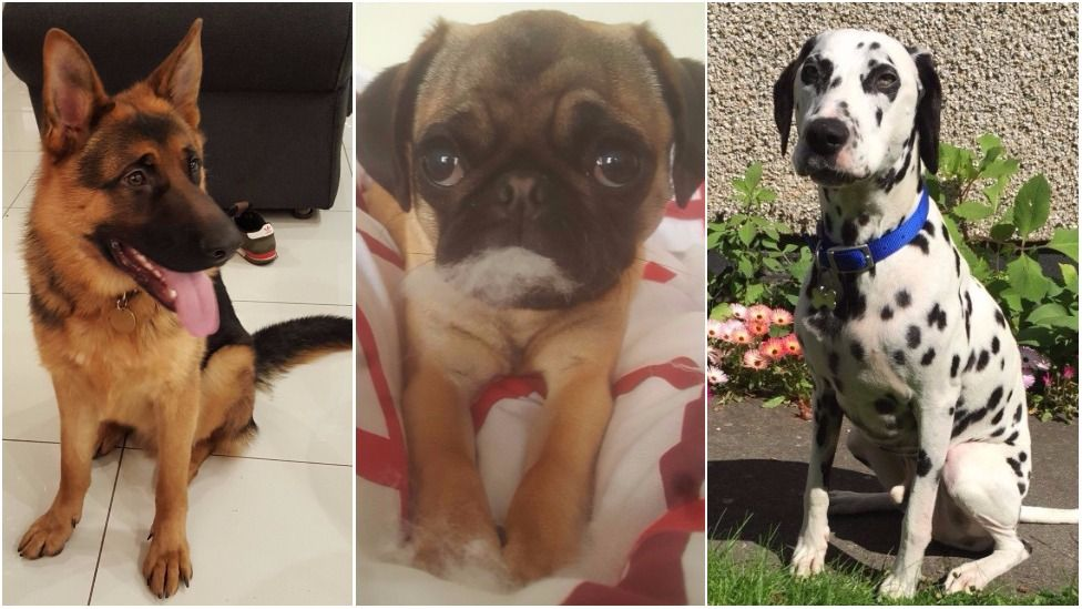 dog collage 2