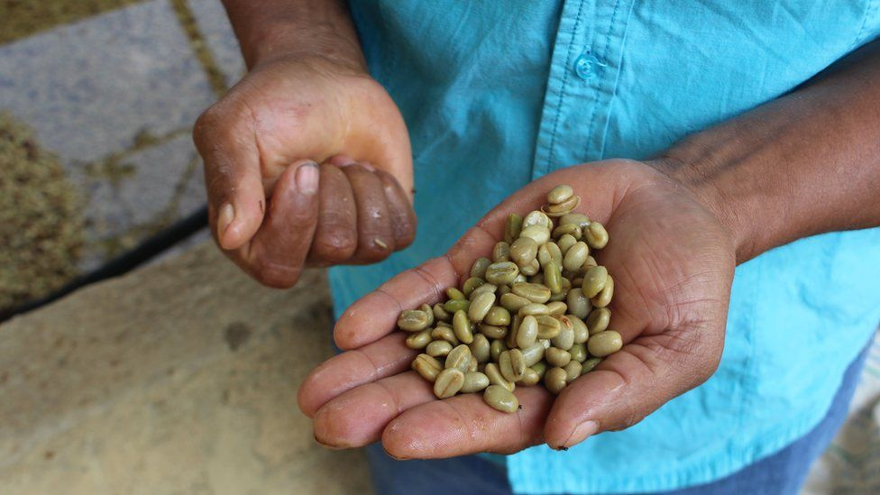 Mr Osorio holding green coffee beans