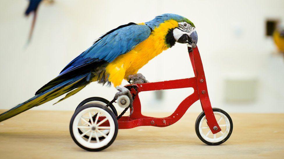 Bird riding a bike