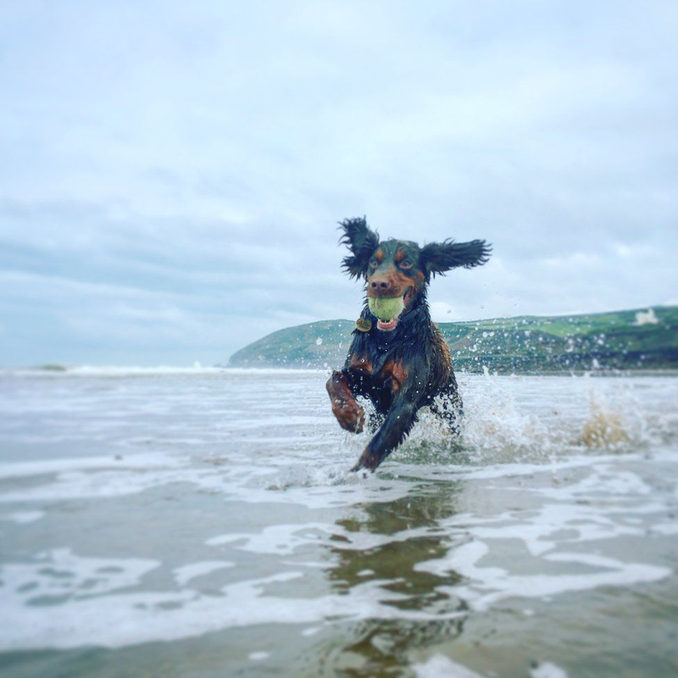 A dog with a ball jumping over waves