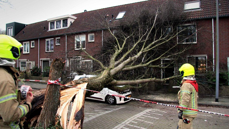 Firefighters assess the damages after a tree fell on a car during Storm Ciara in Rotterdam, the Netherlands, 9 February 2020