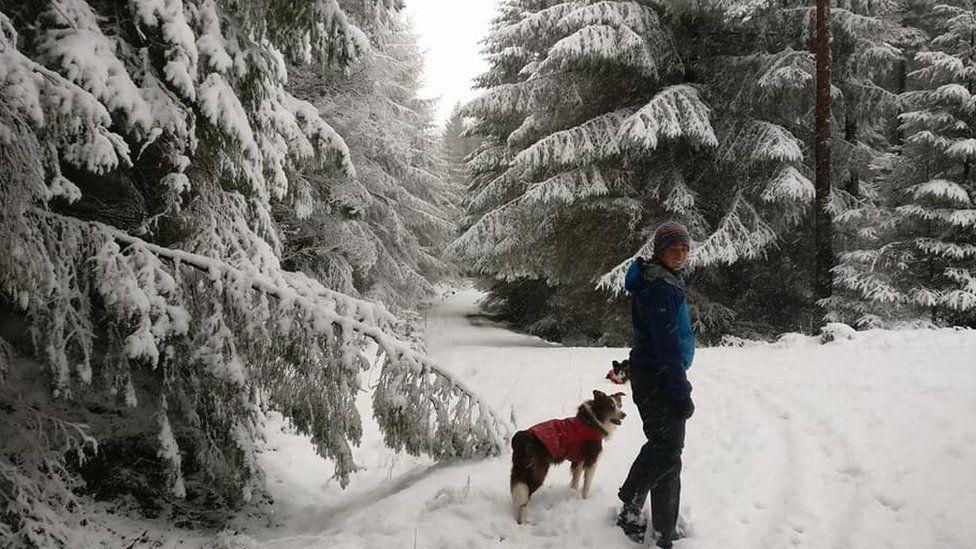 Walker in Cardrona Woods