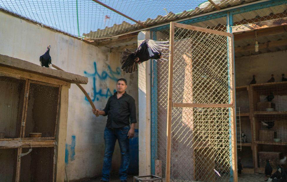 Tariq with bird in coop