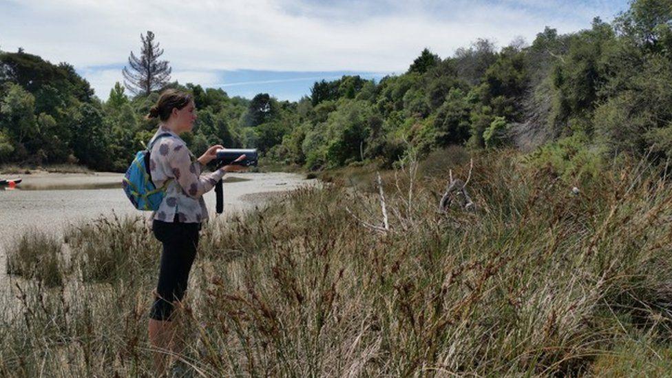 A bird survey on the Waimea Inlet