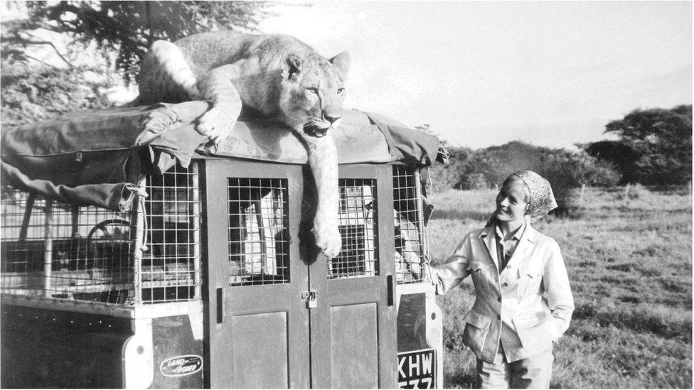lion and Defender