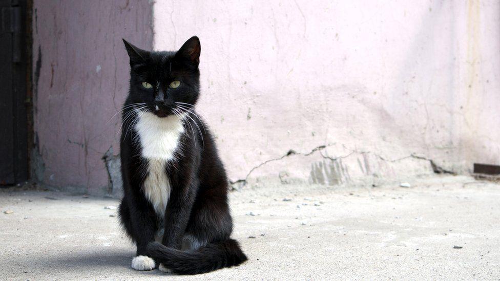 Кошки часто мурчат и когда они одни - ученые предполагают, что это помогает росту костей и заживлению тканей