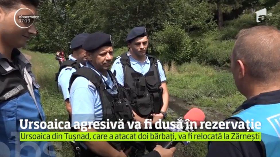 Hunters preparing to move a bear to the Zarnesti Sanctuary in Romania