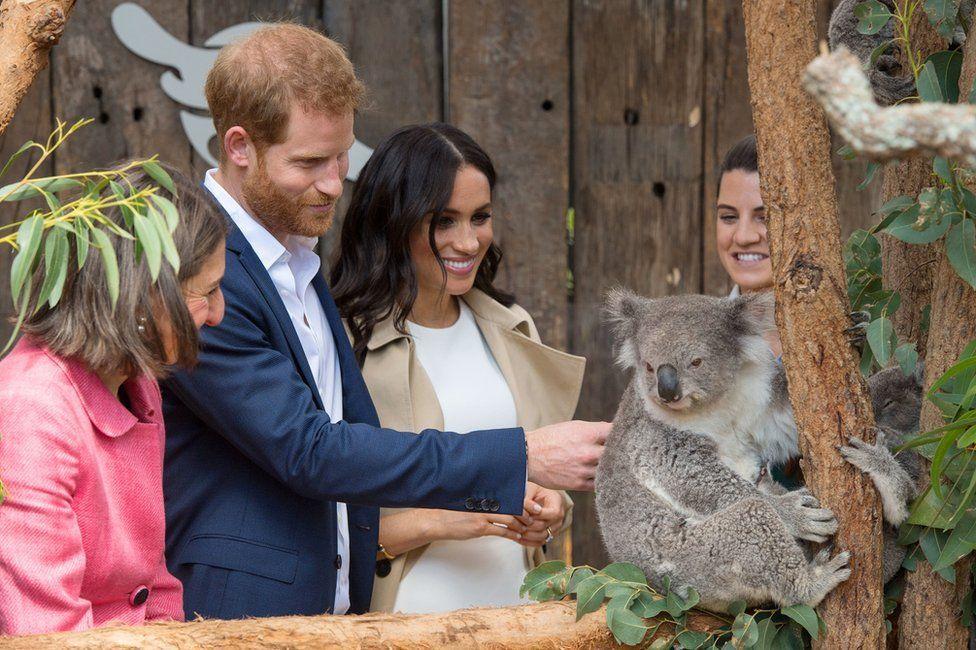 Harry and Meghan meet a koala at Taronga Zoo in Sydney