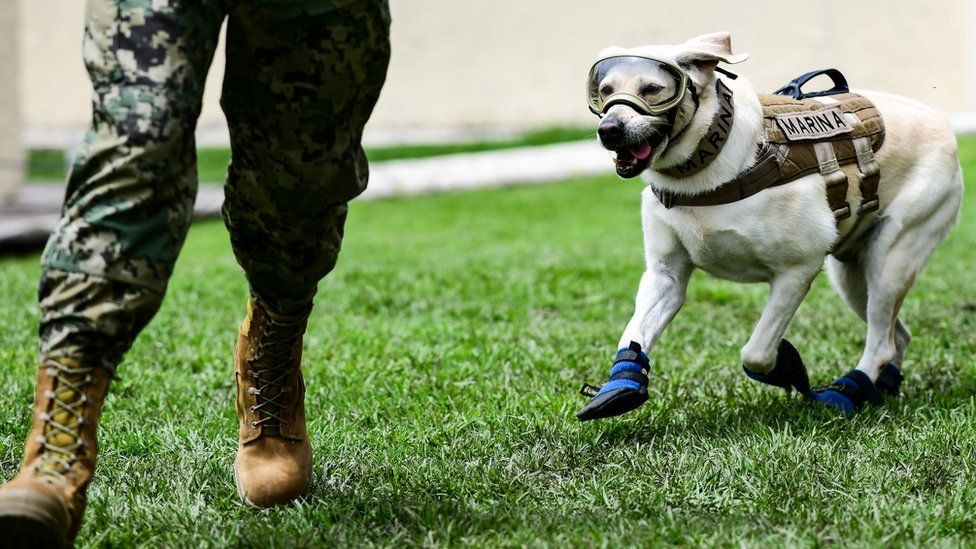 A rescue dog from the Mexican Navy, Frida, and her trainer Israel Arauz Salinas, run during a training session in Mexico City, on September 6, 2018