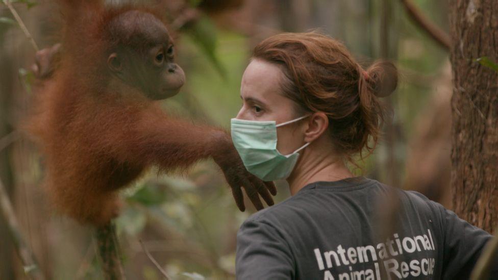 A woman with a baby orangutan
