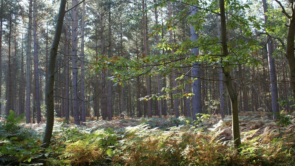 The woodland near Canterbury