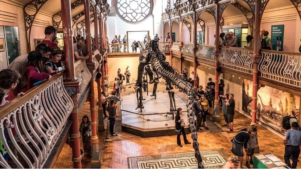 Dippy on Tour at the museum before it closed