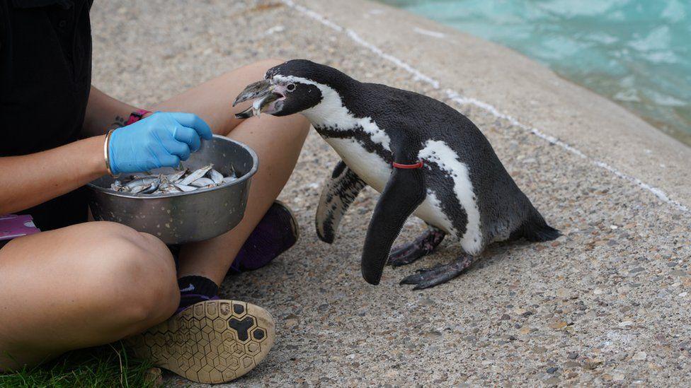 Rosie the penguin
