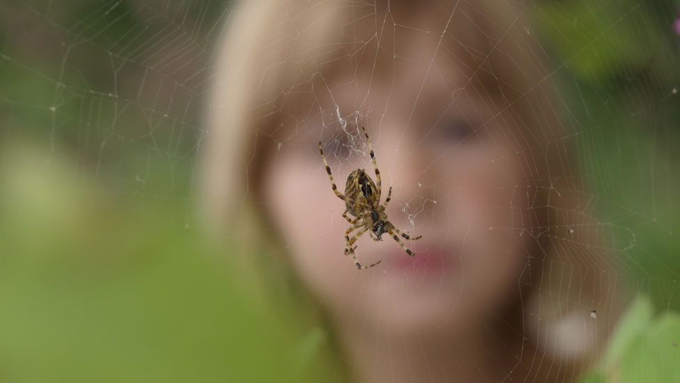 A child looking at a spiderweb (stock image)