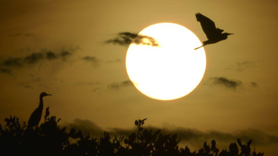 Los eclipses y las extrañas reacciones que provocan en los animales