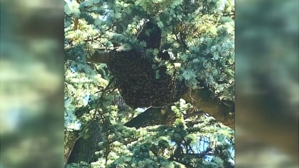 Bees at Leighton Middle School