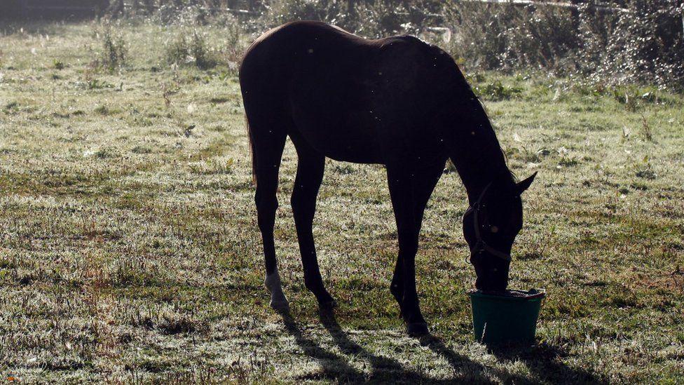 Horse (file image)