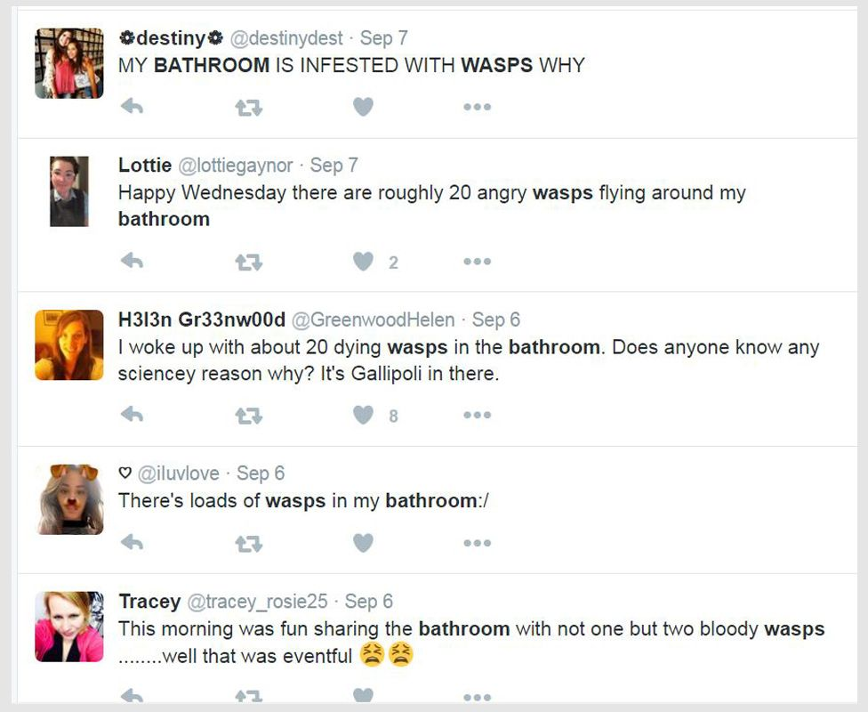 Tweets about wasps