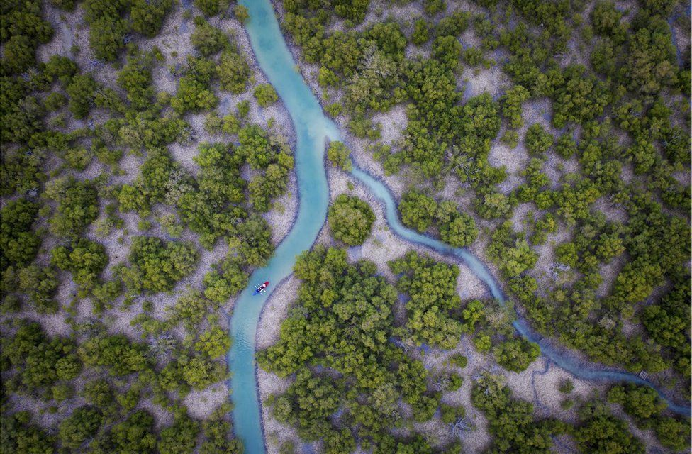 An aerial view of mangrove trees and a river in UAE