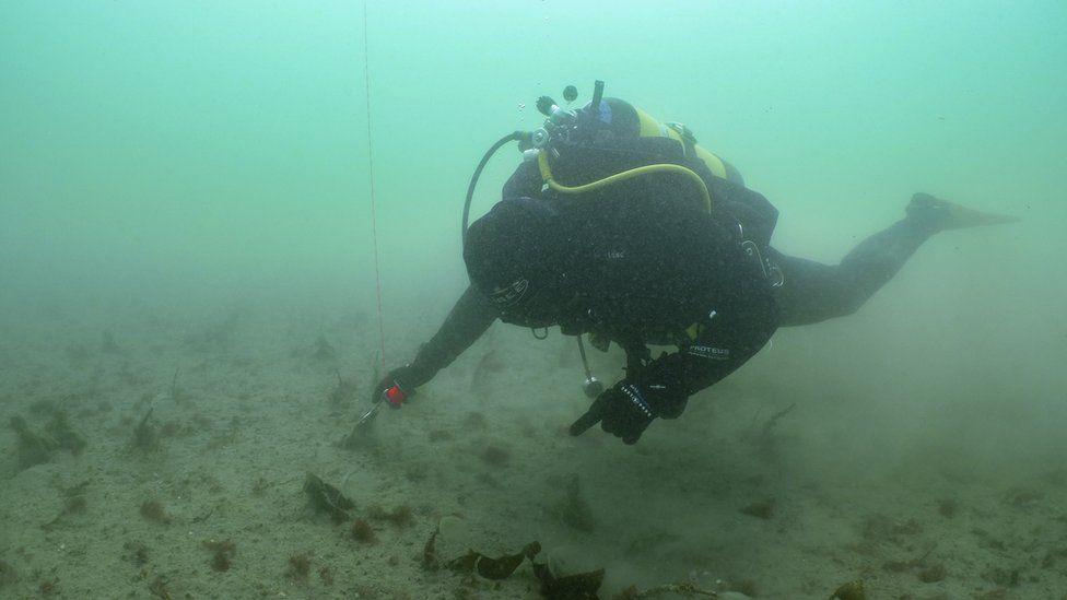 Scuba diver planting seagrass seeds