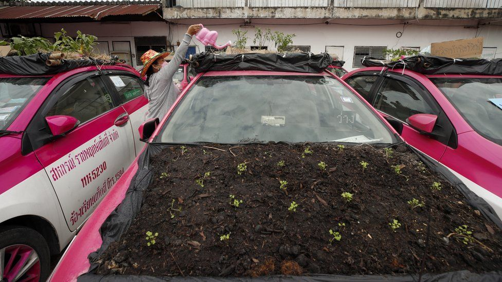 A staff member water vegetables on the roof of a car.
