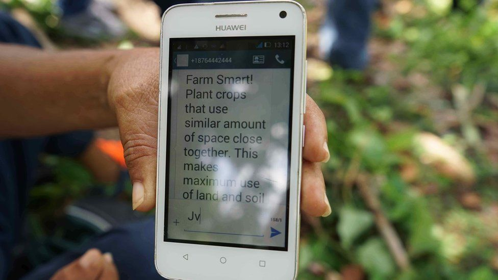 A close-up of a phone with a message advising farmers on how to plant their crops