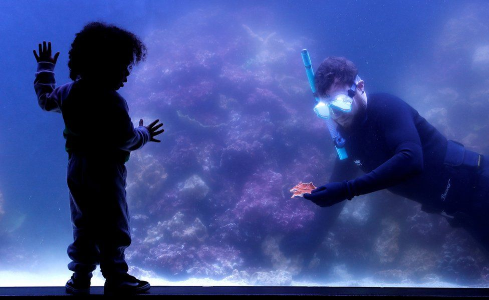 A child puts their hands on the glass of a reef tank as a diver swims in the tank whilst holding coral at ZSL London Zoo