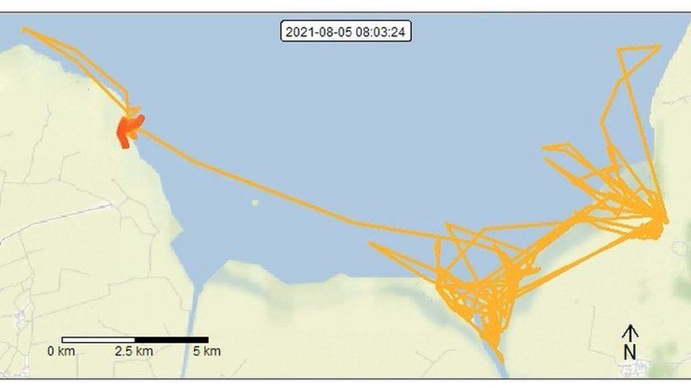 """Curlew""""s movements on GPS."""