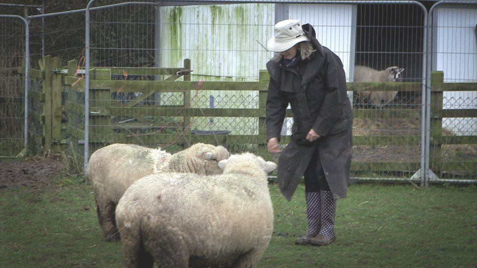 Robbie Bartington with a pair of sheep
