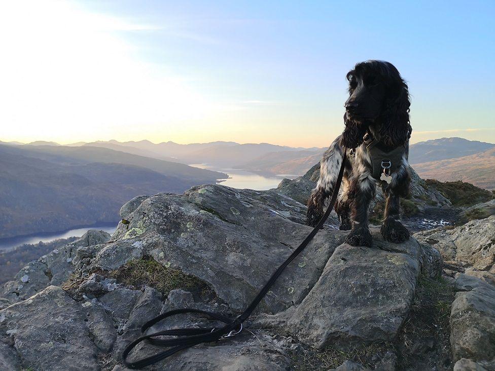 Dog on hilltop
