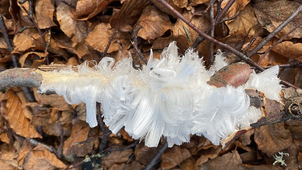 Hair ice at Craigellachie, Moray