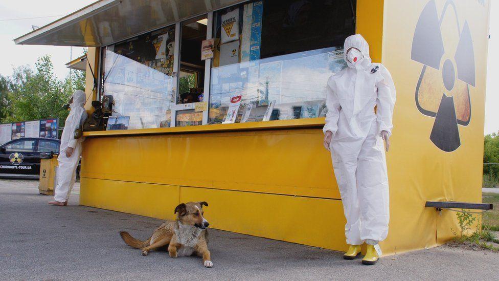 Собака в Чорнобилі