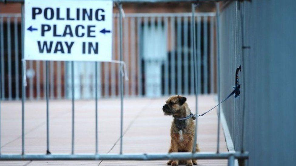 Polling station dog