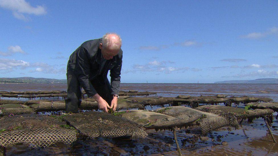 Oyster farmer William Lynch
