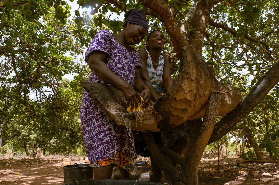Quinta Cabi and Meia Nianta squeeze the juice from cashew apples. They will ferment the juice and then sell it as cashew wine for domestic consumption. Nianta said they can make around 5,000 cfa a day from selling the locally made brew.