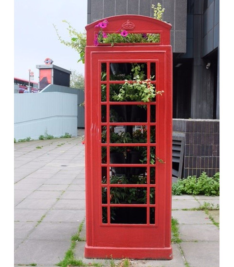 A phone box being used like a greenhouse full of plants