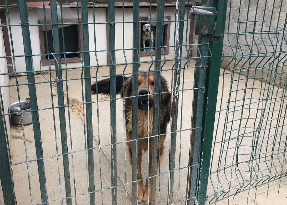 Dogs at shelter near Toulouse