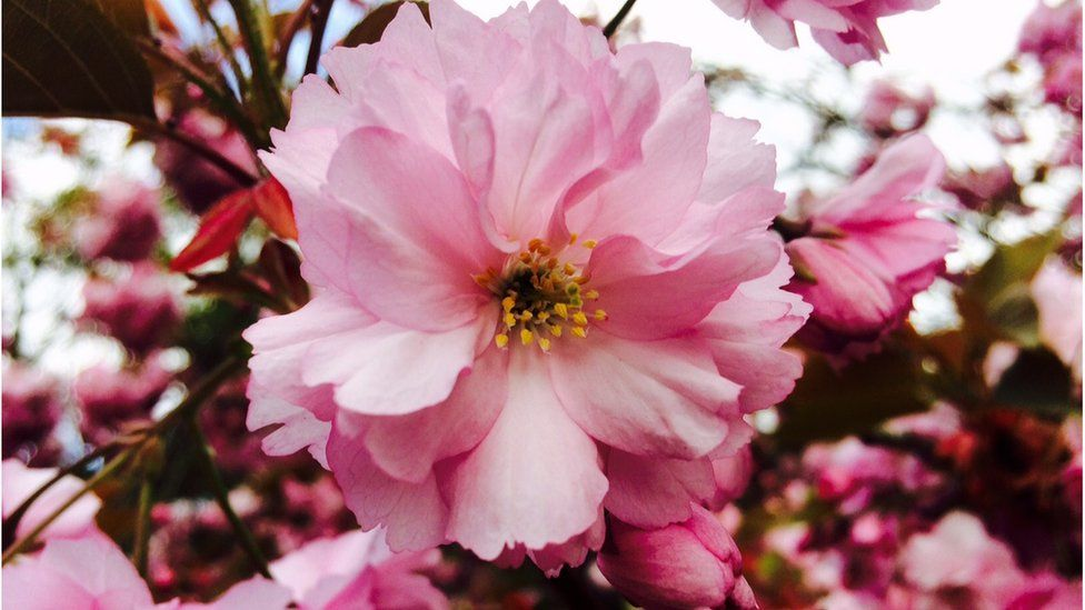 Beautiful blossom in Abingdon