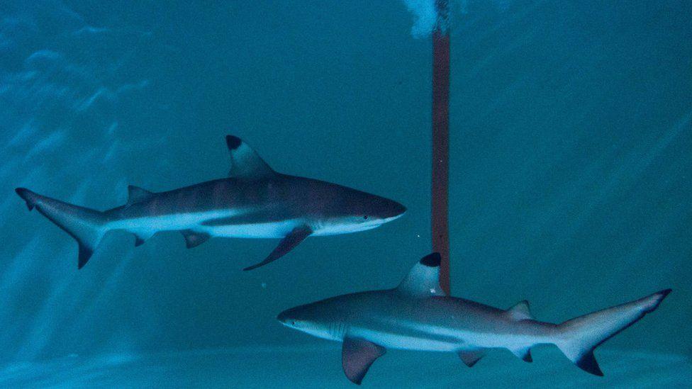акулы в аквариуме