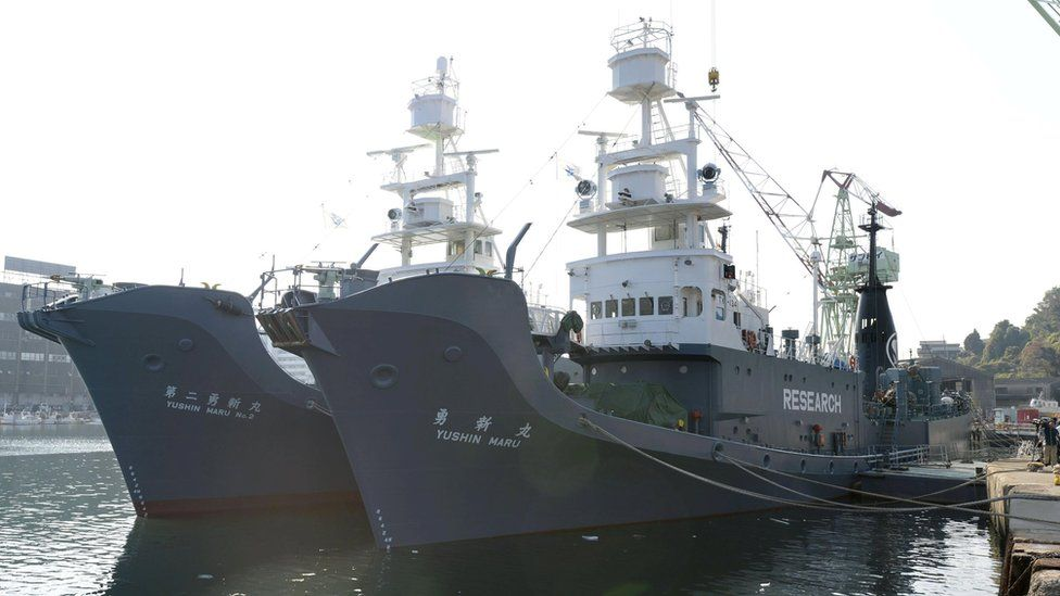 Japanese whaling vessels the Yushin Maru and Yushin Maru No.2, at a port in Shimonoseki, south-western Japan