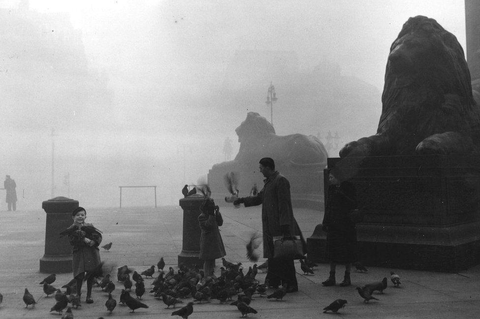 The lions in Trafalgar Square in London