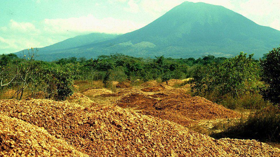 """Costa Rica: cómo 12.000 toneladas de desperdicios de naranjas hicieron un """"milagro verde"""" y revivieron un bosque"""