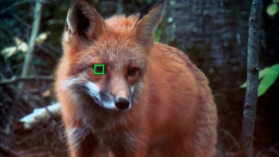 Sony autofocus